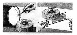Fig. 11. Method for 'silking' spiders. Illustration by George Childs (Hook, 'Spiders for Profit', p. 459). Credit: Natural History Magazine.